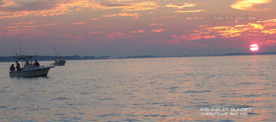 Chesapeake bay fishing for Chesapeake bay fish