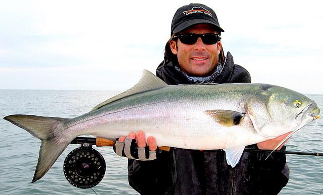 Virginia Fishing Report- CBBT- Chesapeake Bay Bridge ...